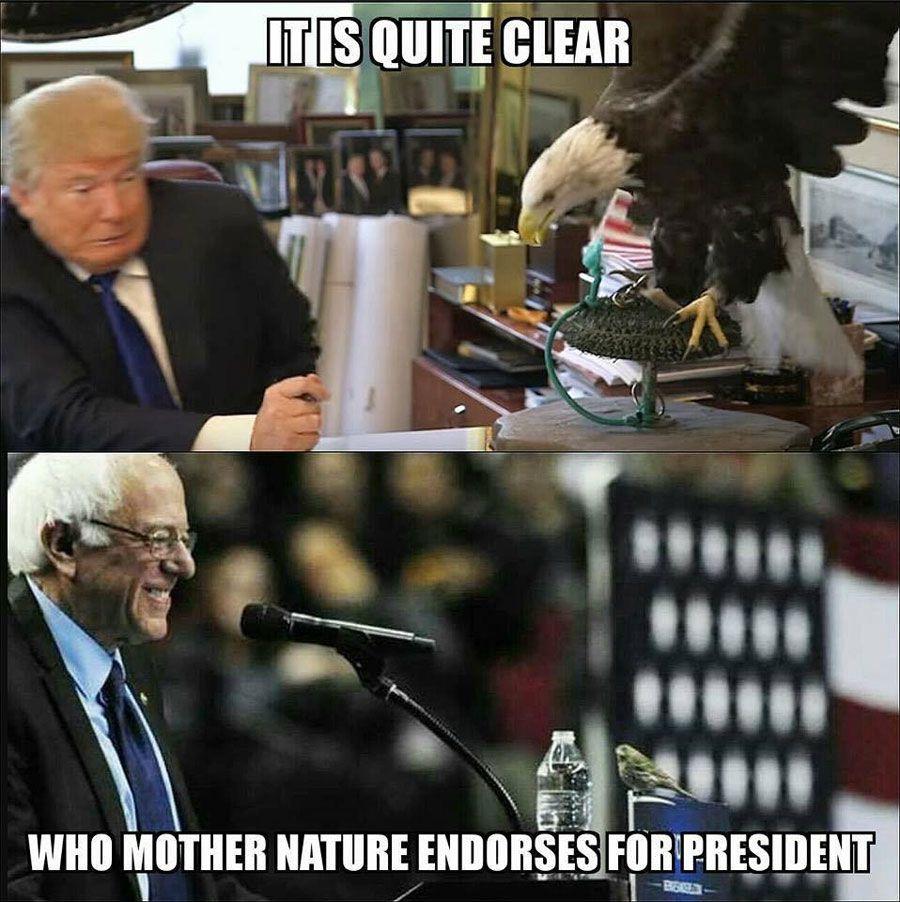 Birdie Sanders vs Trump Bald Eagle
