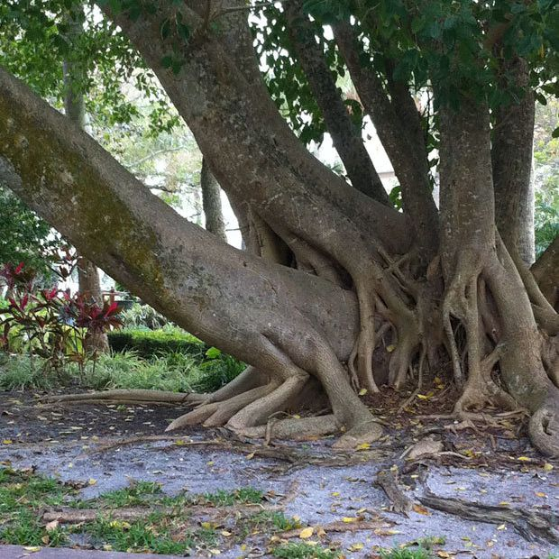 20 Naughty All Natural Trees That Look So So Dirty