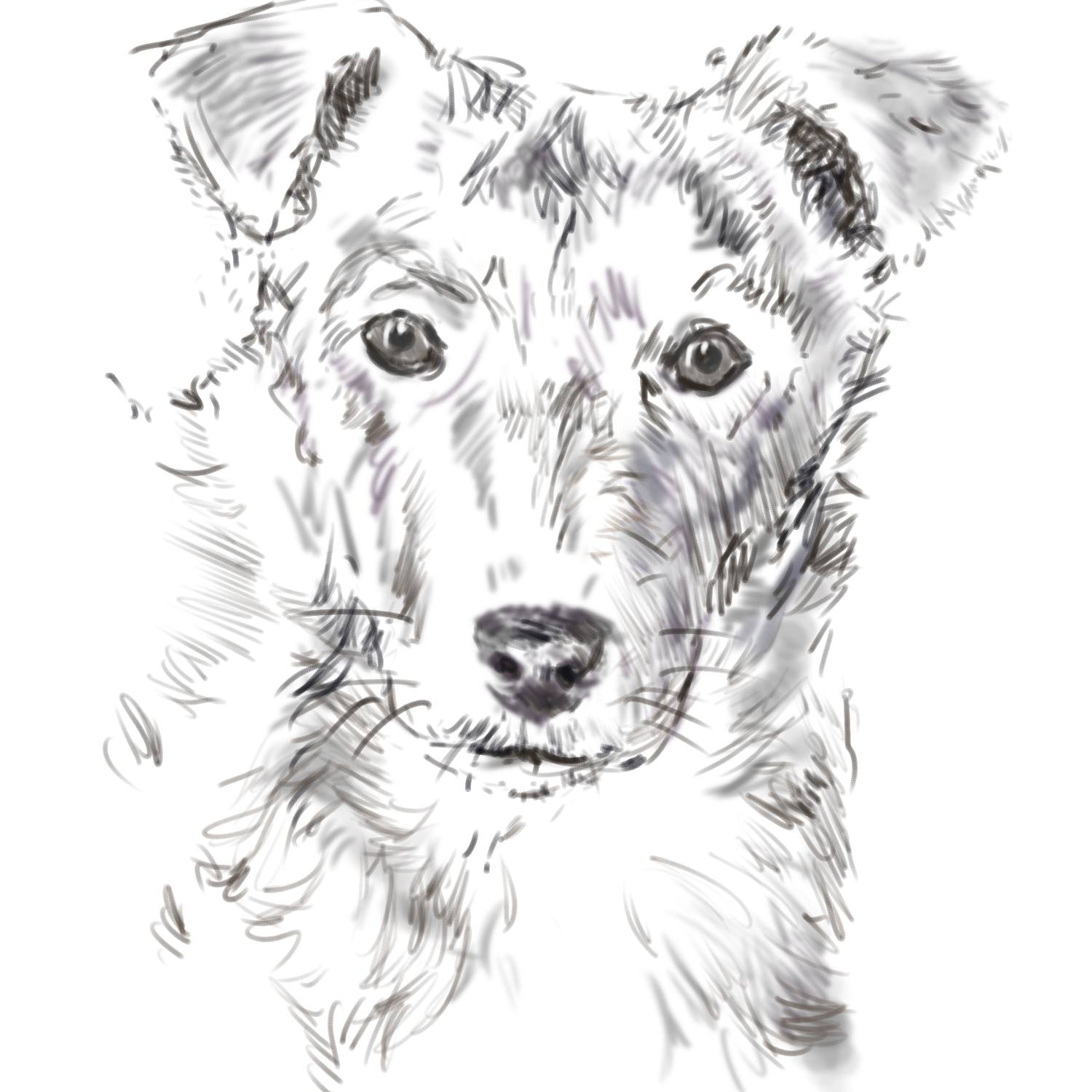 Draw a dog from a photograph