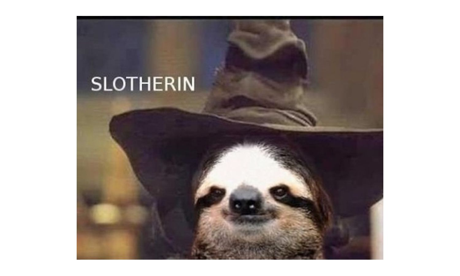 sloth with wizard's hat