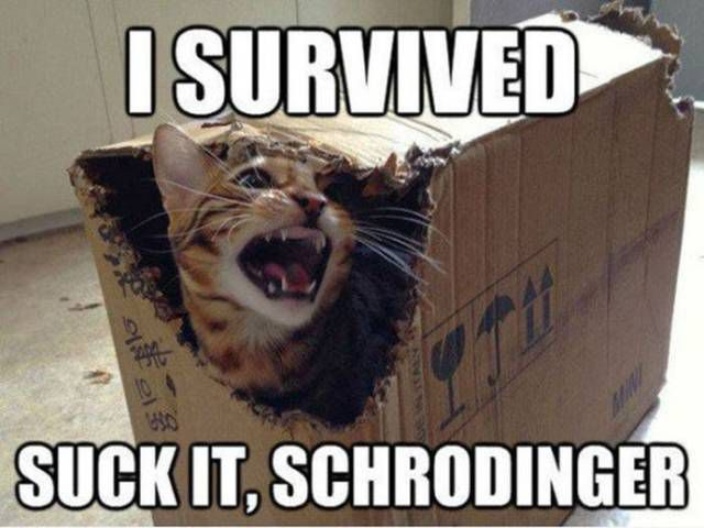 Cat science meme