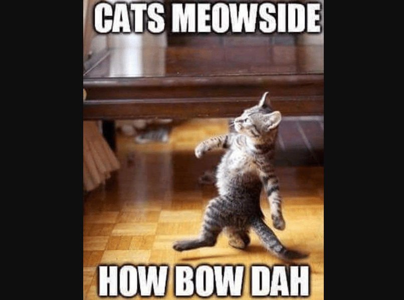 Cats meowside meme