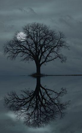 full moon behind tree silhouette