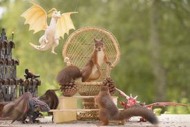Game of (Pine) Cones meme squirrels on wicker chair surrounded by dragons