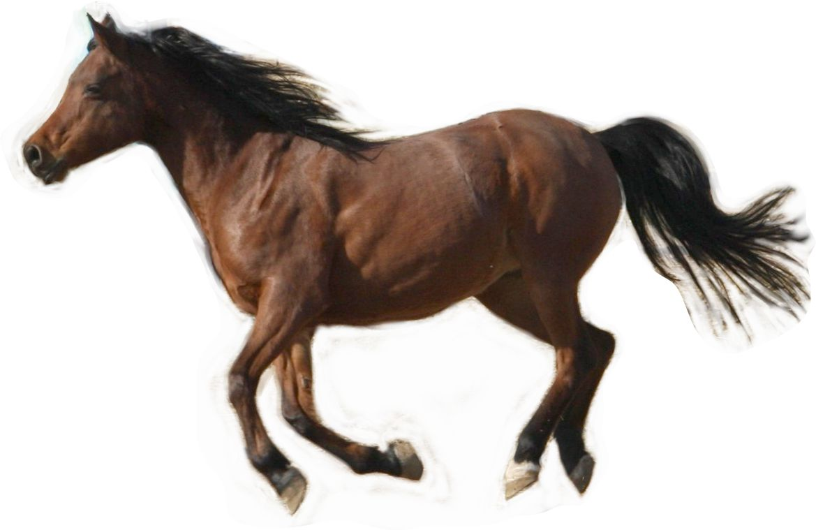 Running horse reference photo