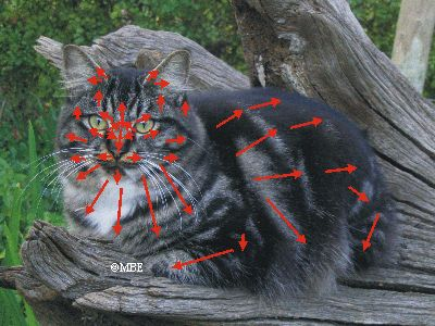 Painting Cats: Fur Map