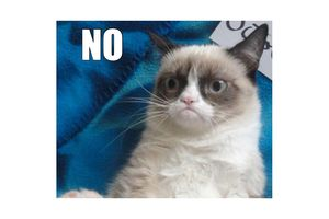 Picture of grump cat with caption: NO