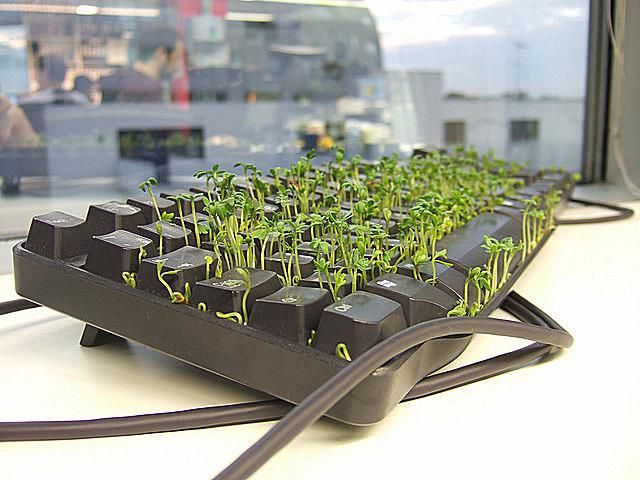 keyboard-grass.jpg