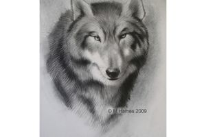 Sketched drawing of a wolf