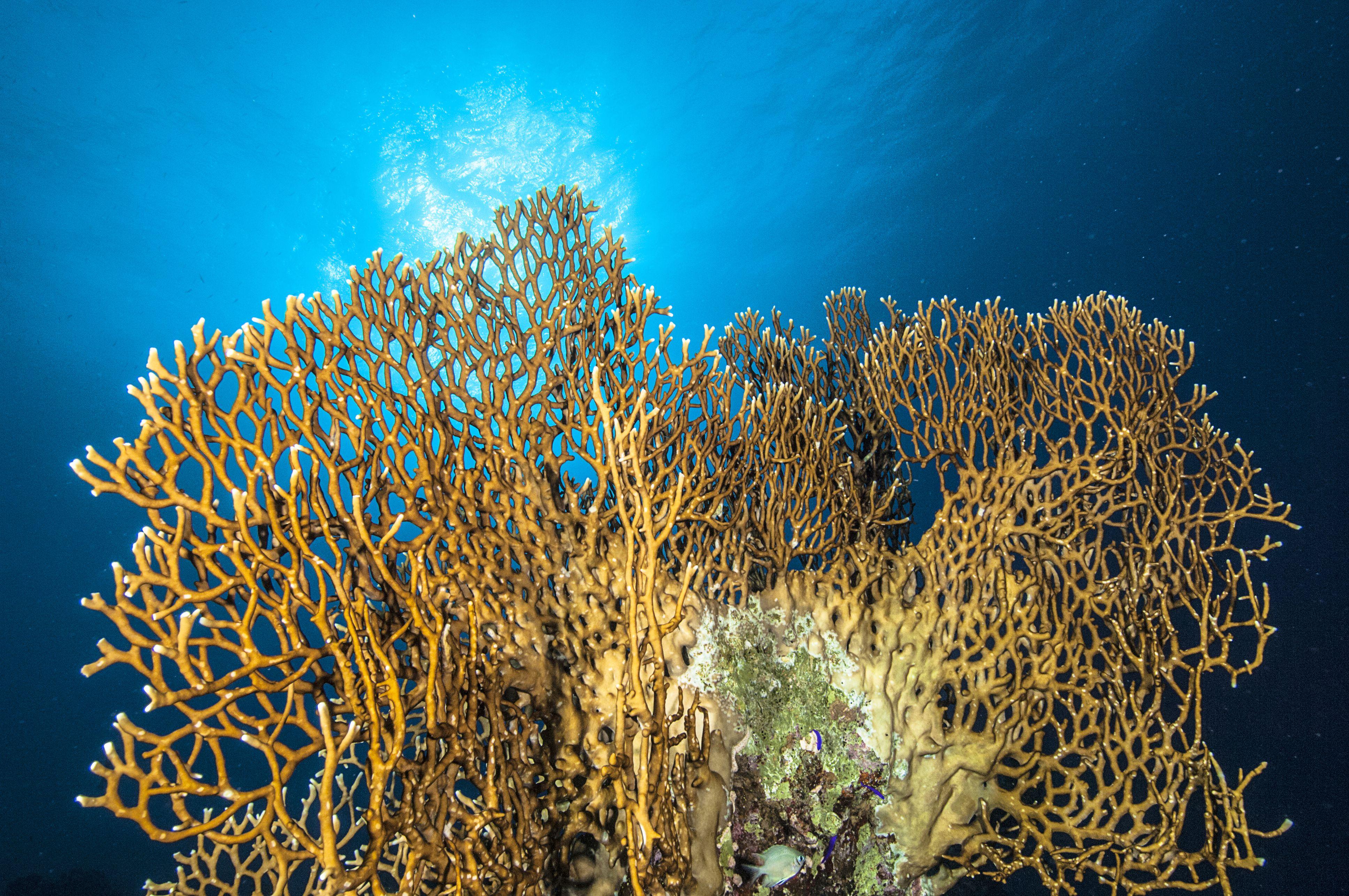 Underwater World of Red Sea.