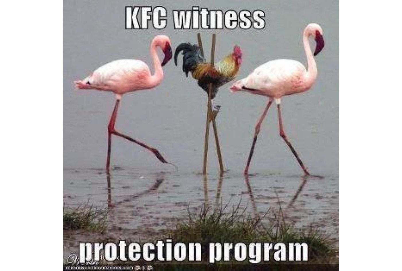 chicken and flamingoes meme