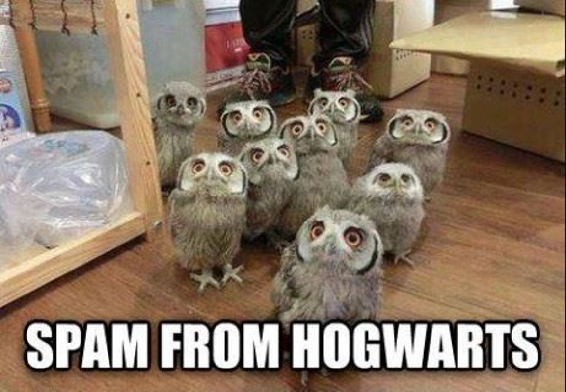 Hogwarts owl meme