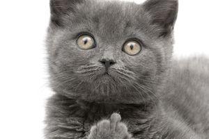 Cat giving finger