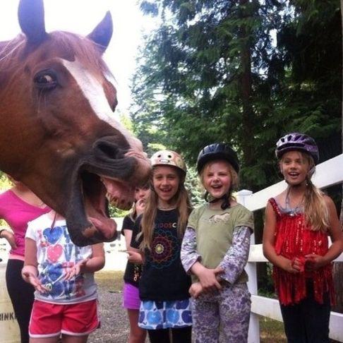 horse photobomb