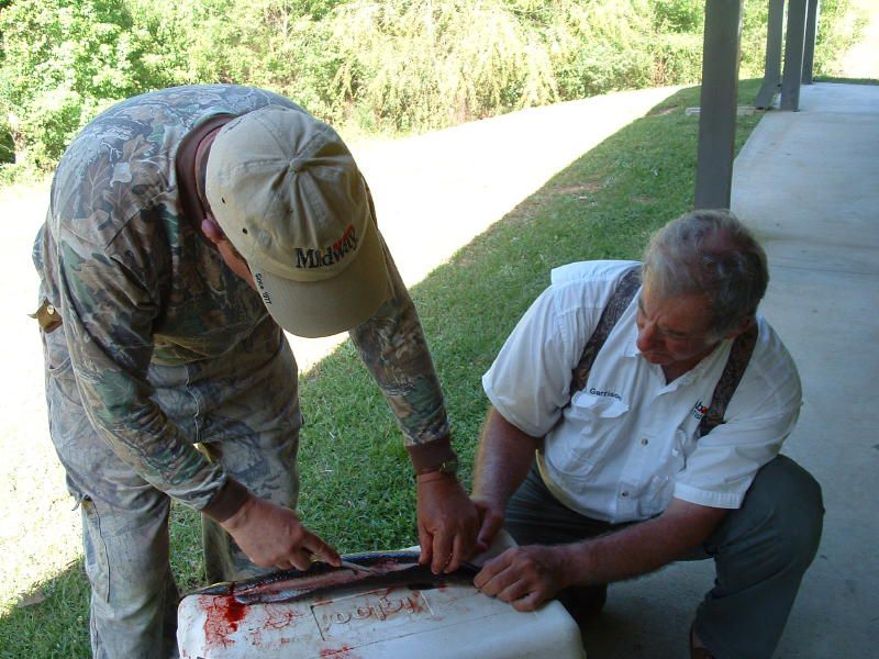 Split the gar from head to tail with tin snips then cut the meat out