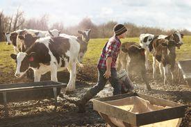 Boy farmer feeding cows in dairy farm field