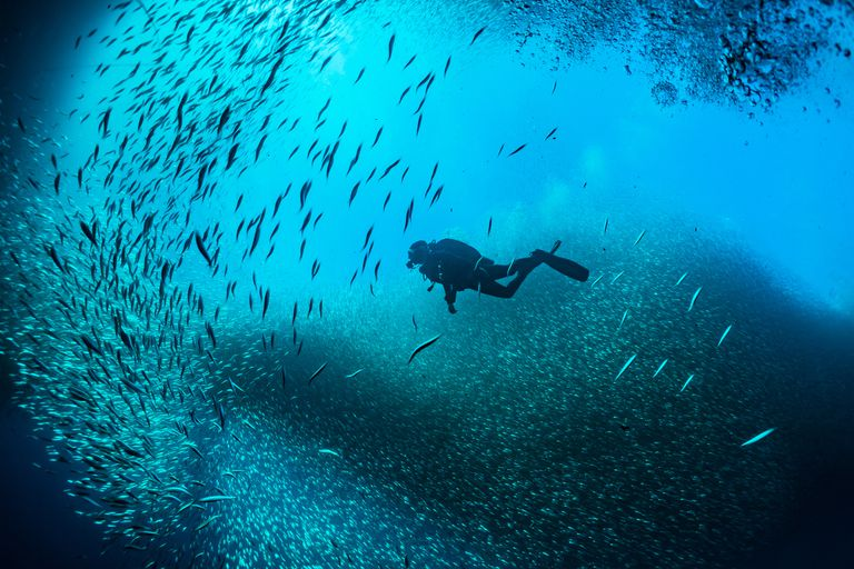 Scuba Divers Swimming In Between School Of Fish Undersea