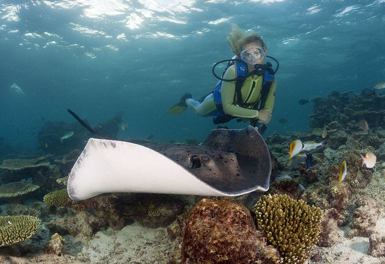 Scuba diving in the maldives with a stingray.