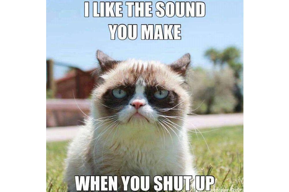 Picture of a grumpy cat meme