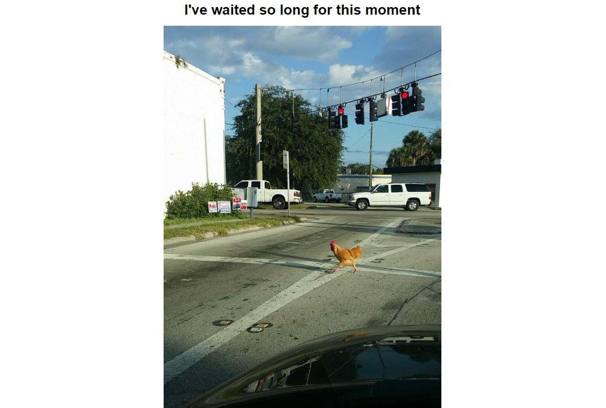 chicken crossing the road meme