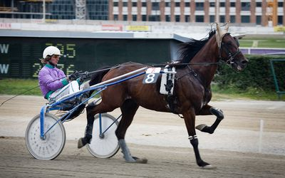 Free Harness Racing Programs With Past Performances