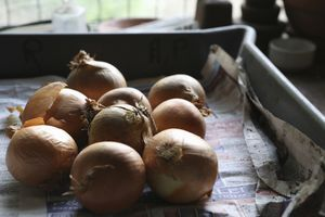 onions in tray for storage