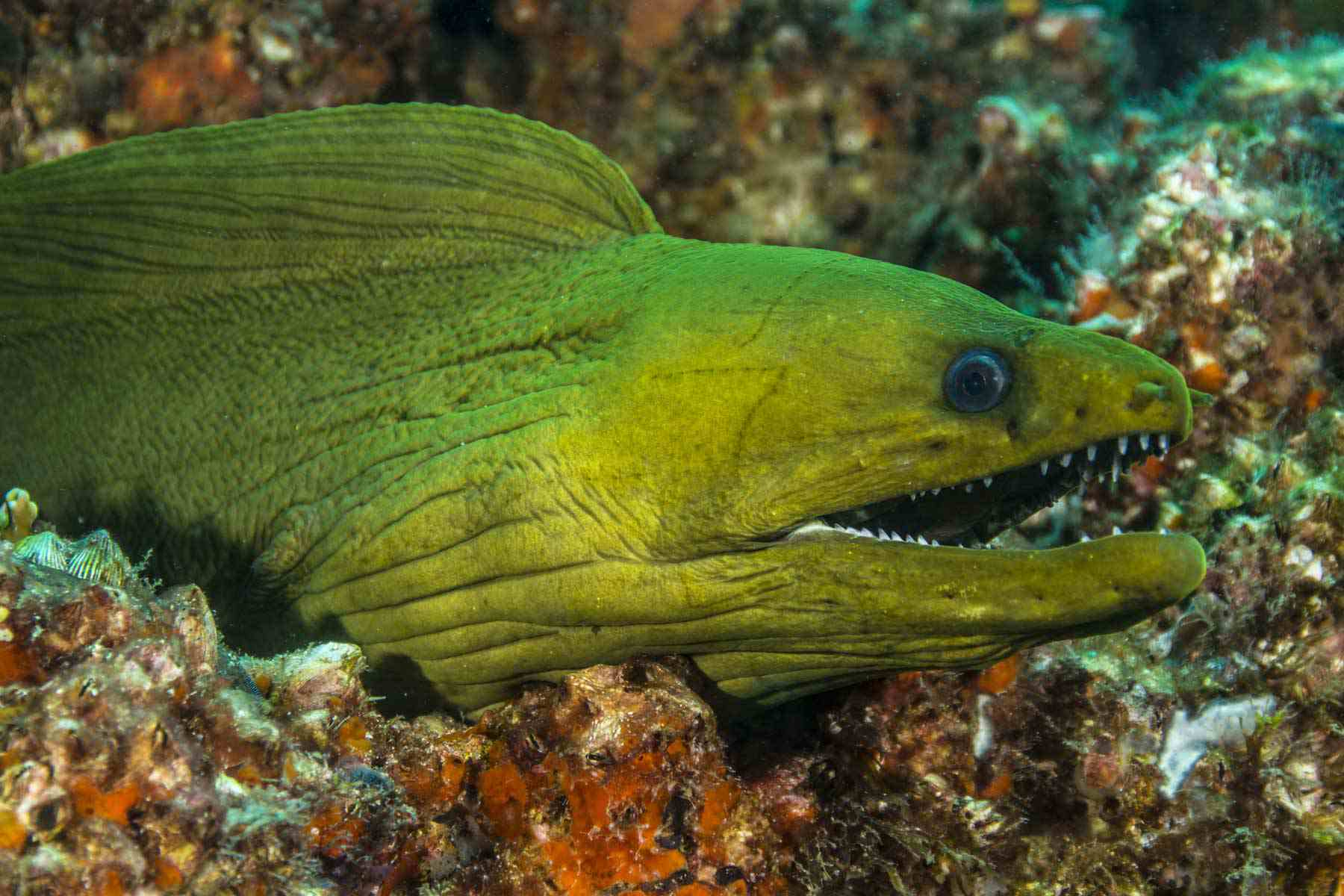 13 Dangerous Fish And Sea Animals That Divers Commonly Fear