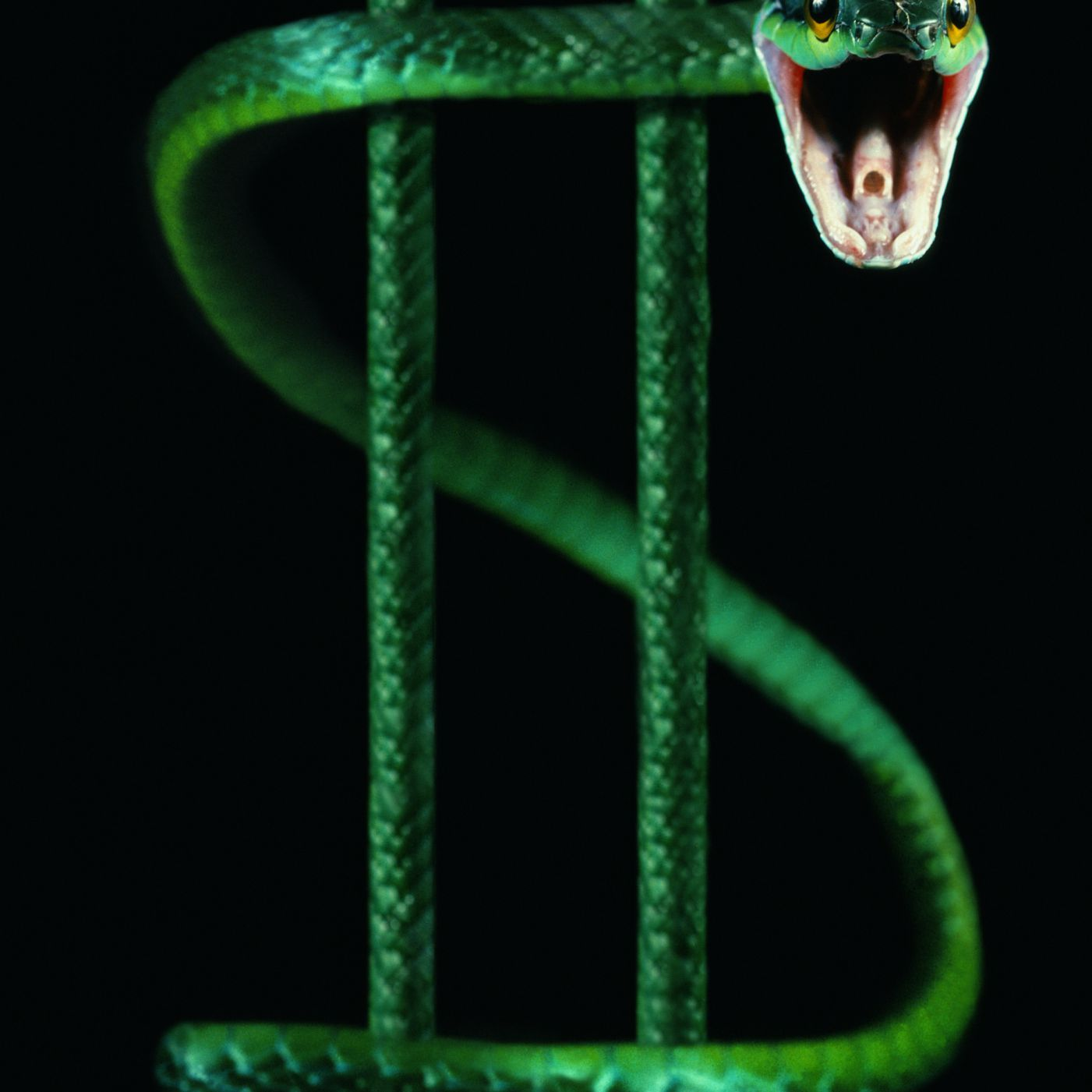 Image of a snake wrapped around a dollar sign.
