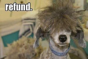 Meme of a dog with a bad haircut