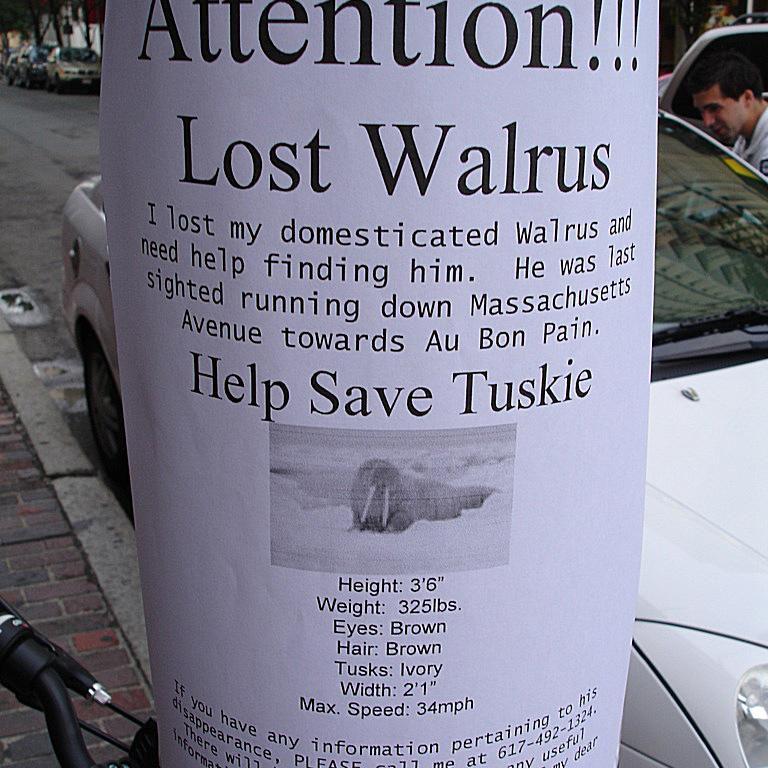 lost-walrus.jpg