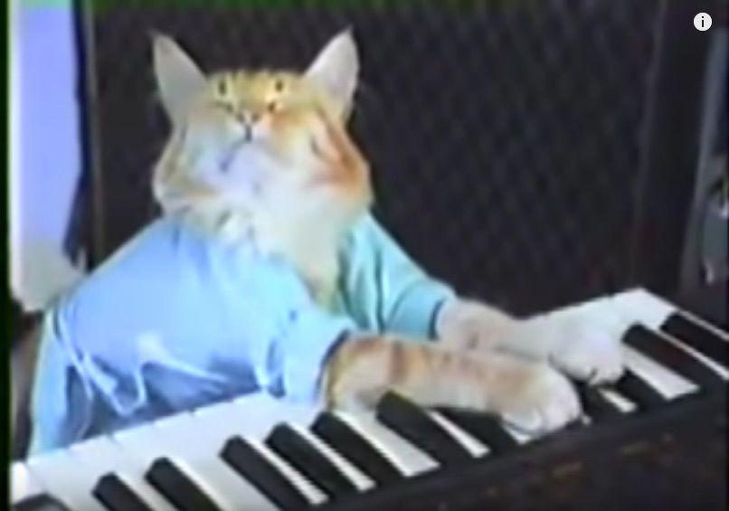 Screenshot of viral meme Keyboard Cat
