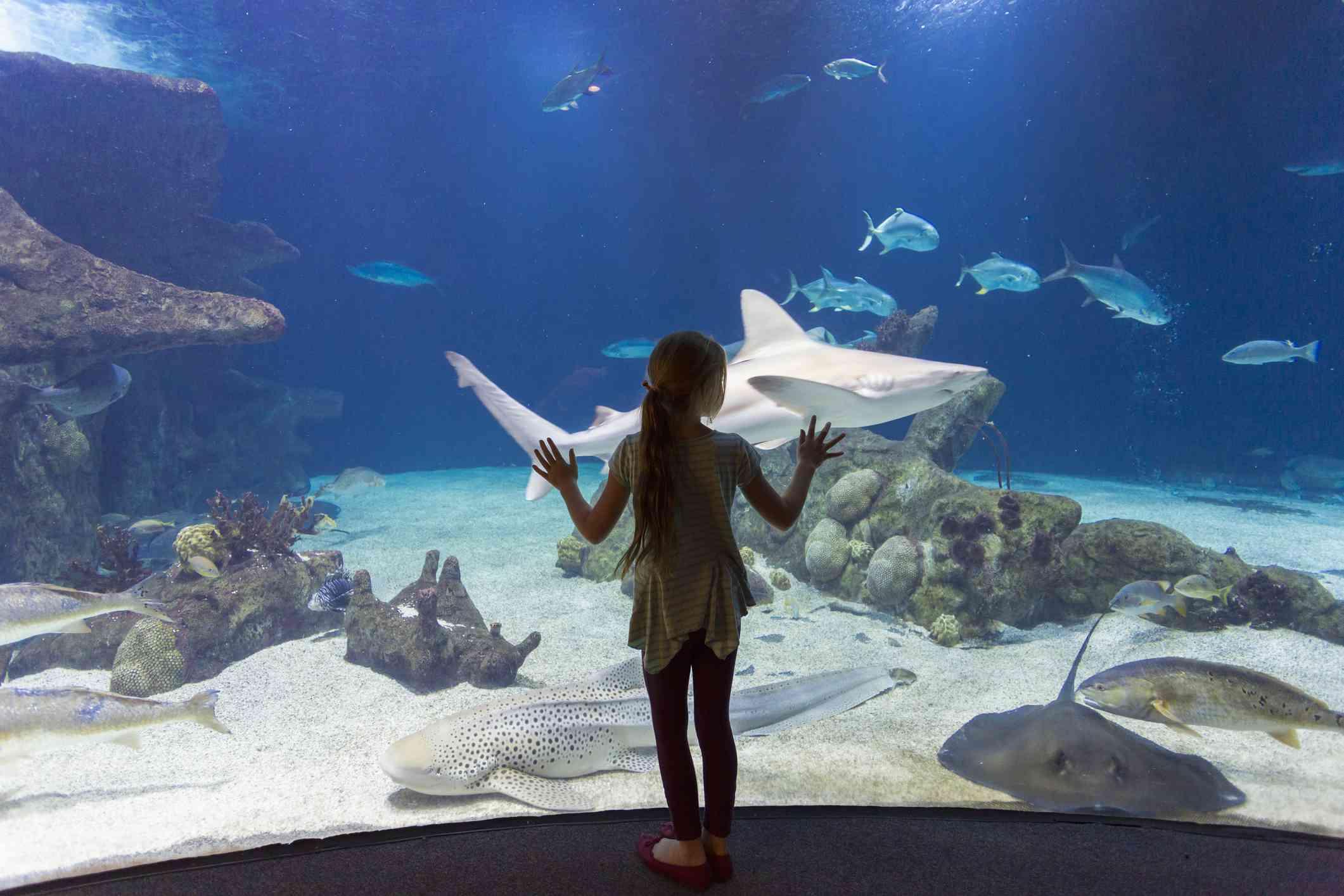 Caucasian girl admiring fish in aquarium