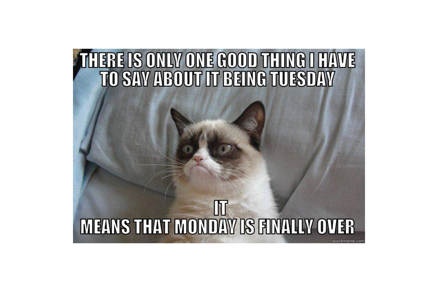 Grumpy Cat and his love for Tuesdays meme