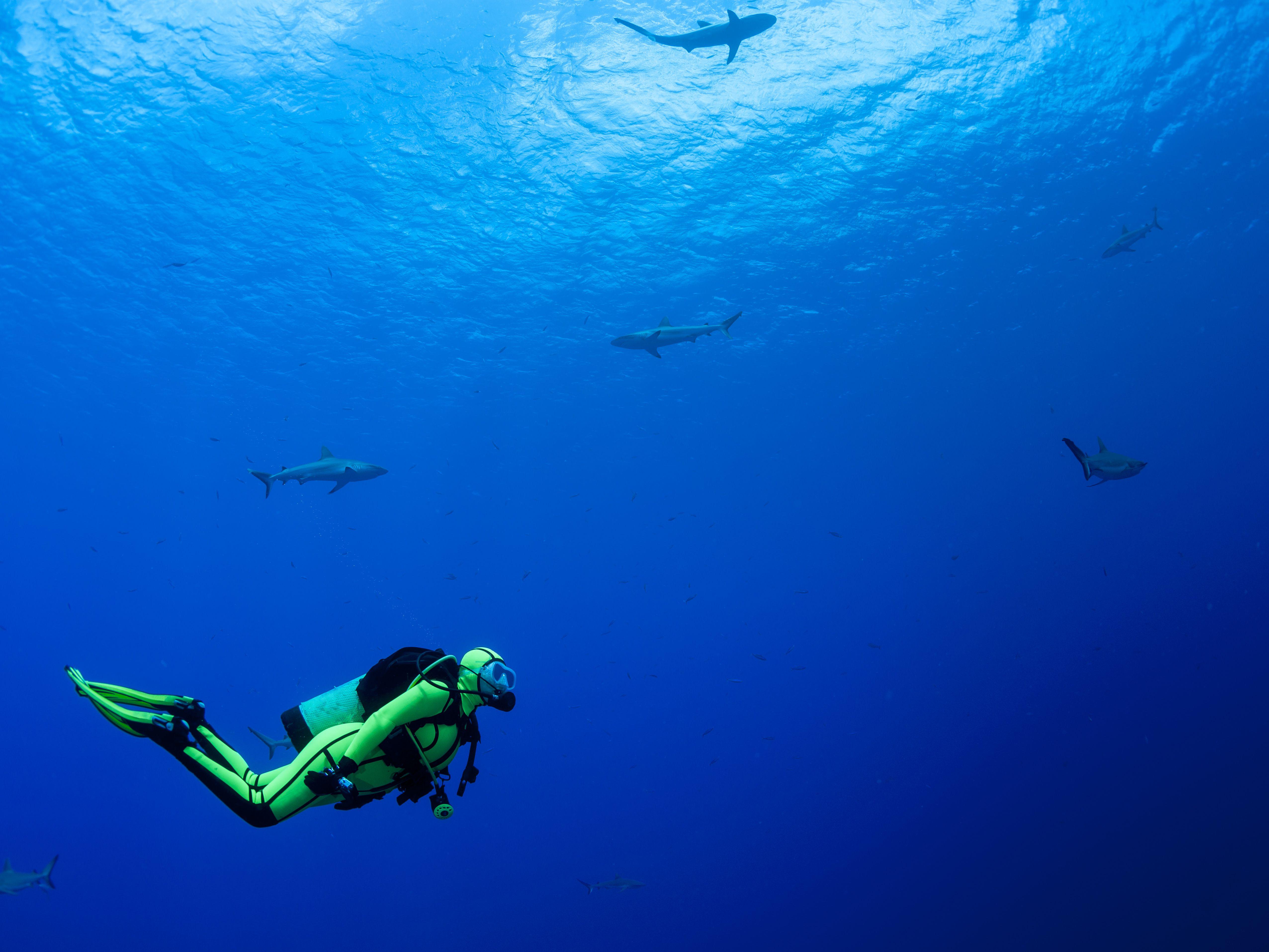 20 mon Scuba Diving Hand Signals