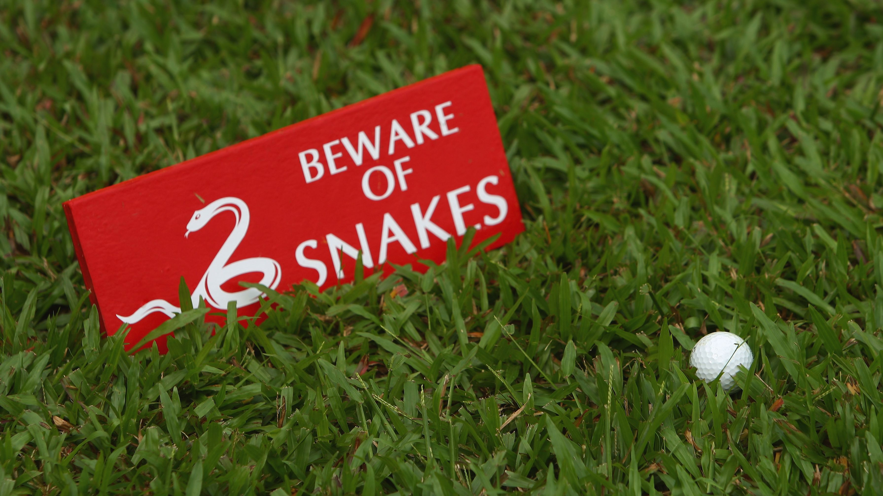 Various golf betting games snake binary options magnet sign-in