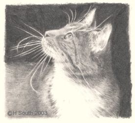 My Cat Joey, Drawn in Pencil by Helen South, About.com Guide to Drawing and Sketching