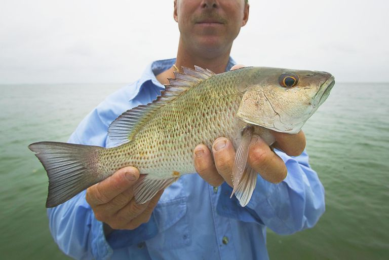 Man holding fresh caught mangrove snapper