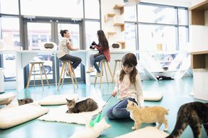 Girl playing with cats in a cat cafe