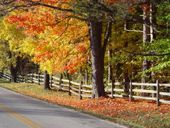 Autumn pic of tree