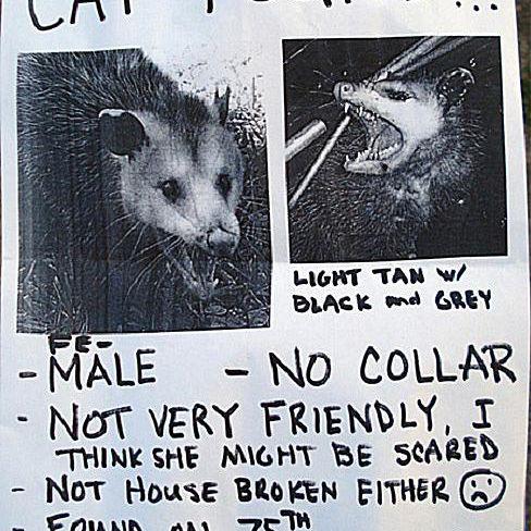 possum_poster.jpg