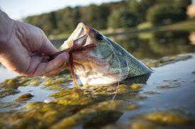 Lipping a bass
