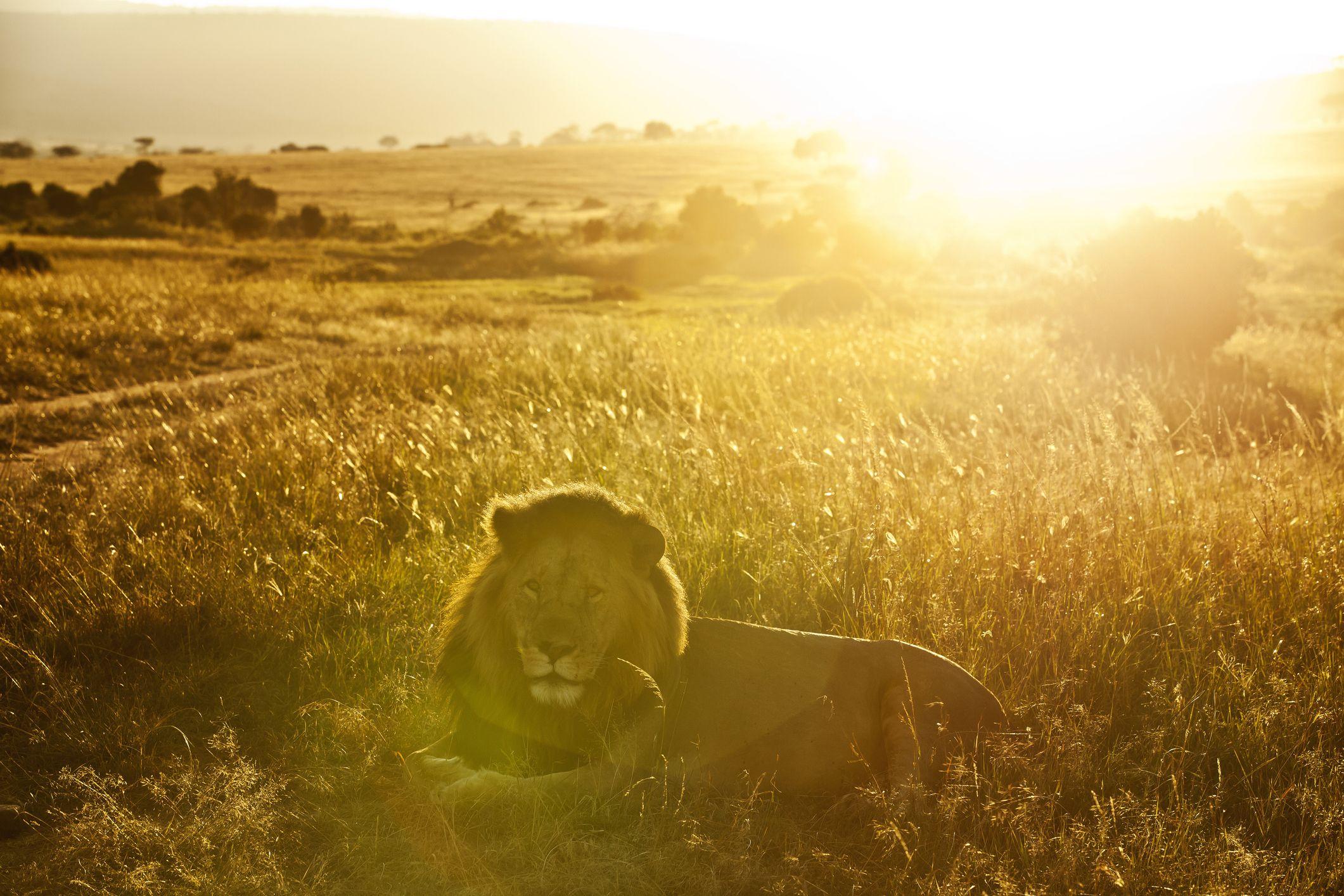 лев и солнышко картинки положить хозяйственных