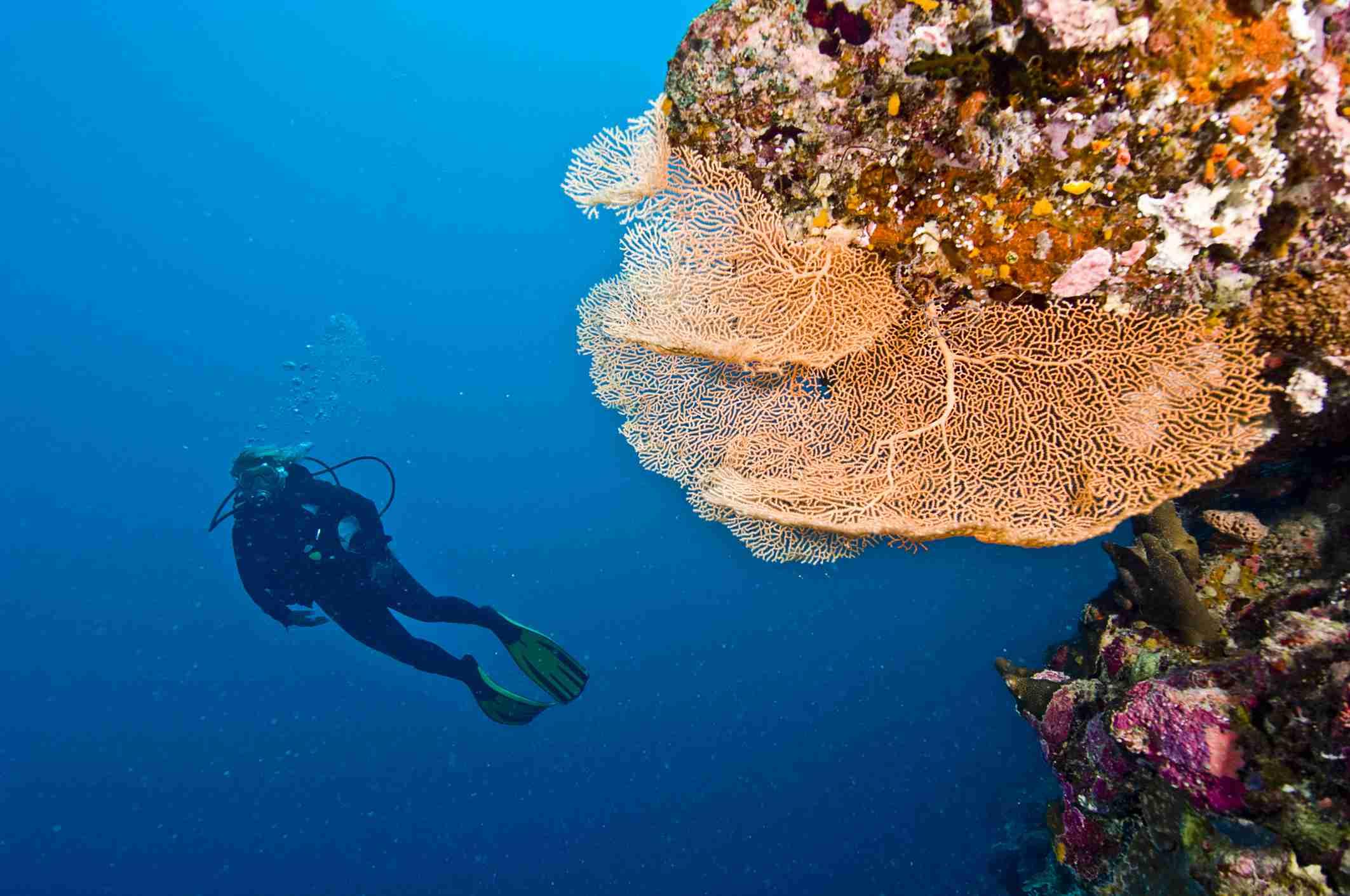The Underwater World of Micronesia, Oceania.
