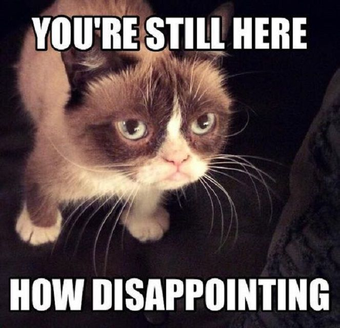 Grumpy Cat Disappointed You Are Still Here