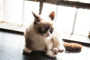 Internet Cat Film Festival World Tour 2013-2014