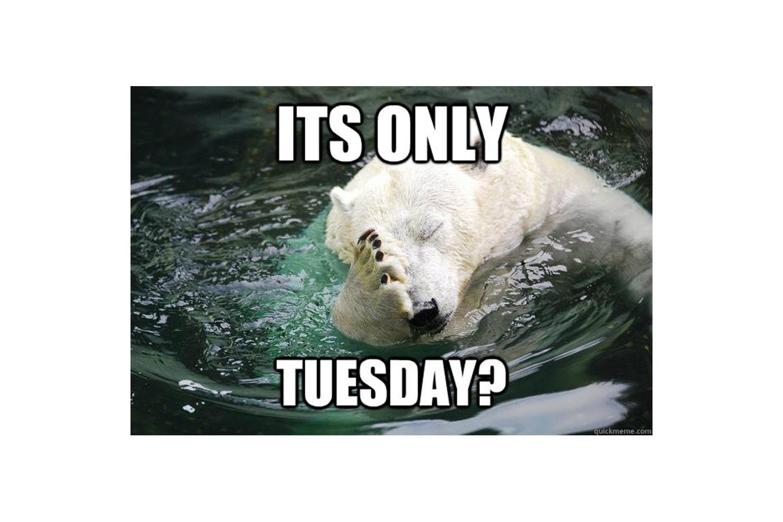 Polar bear with face palm meme