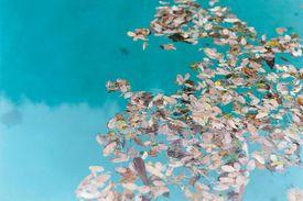 Leaves floating on pool water