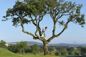 Golfer trying to hit golf ball that is stuck in a tree