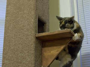 A cat on a carpeted cat tower