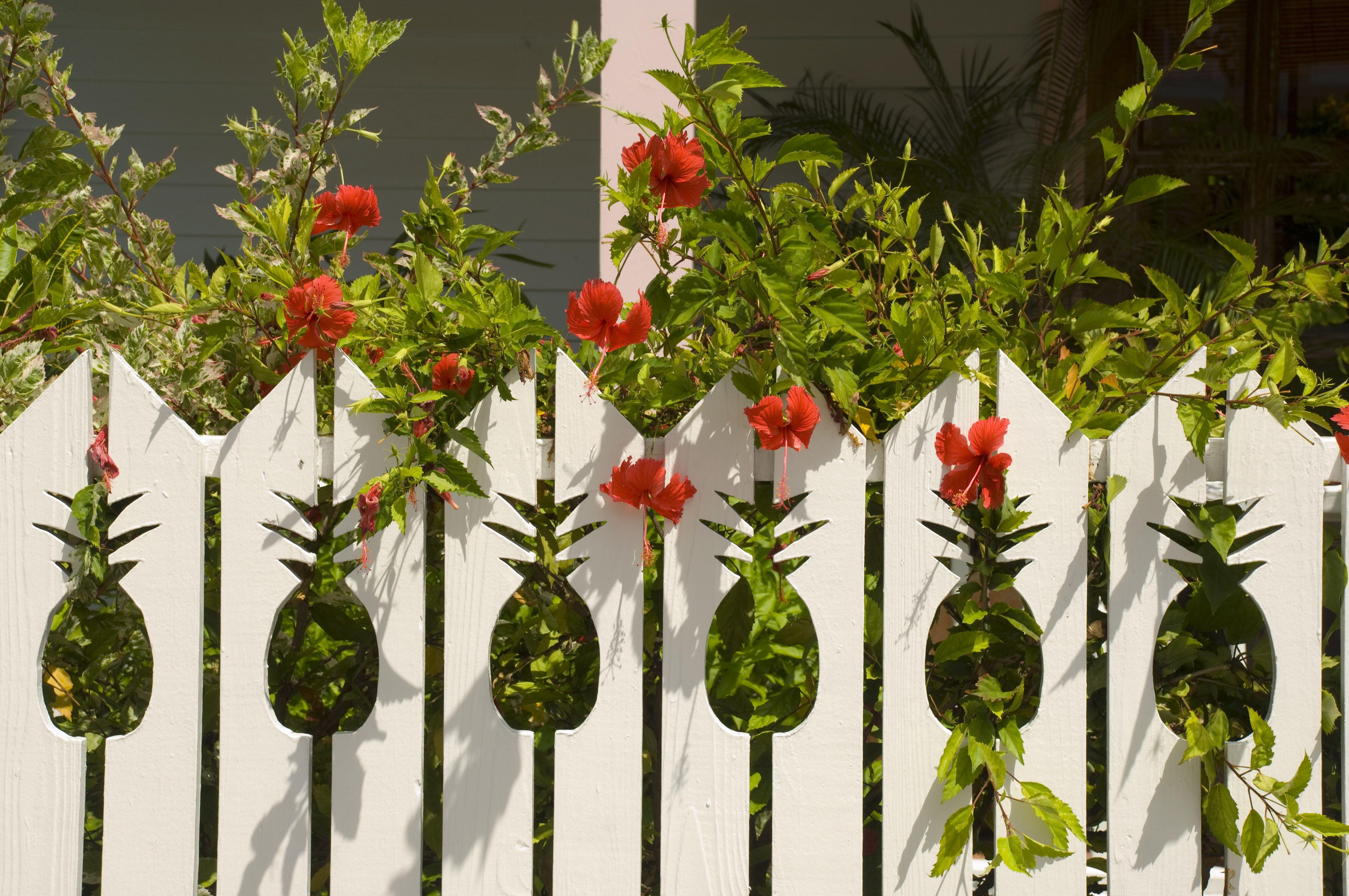 Edible Plants for Your Backyard